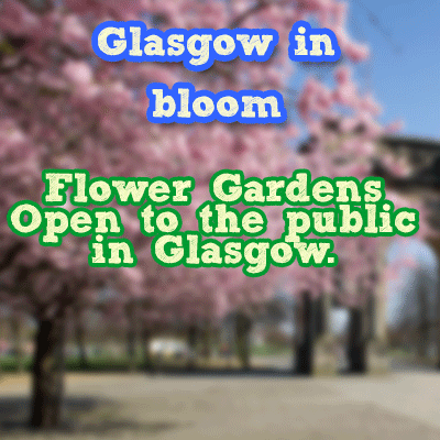 glasgow-in-bloom flowers gardens in Glasgow